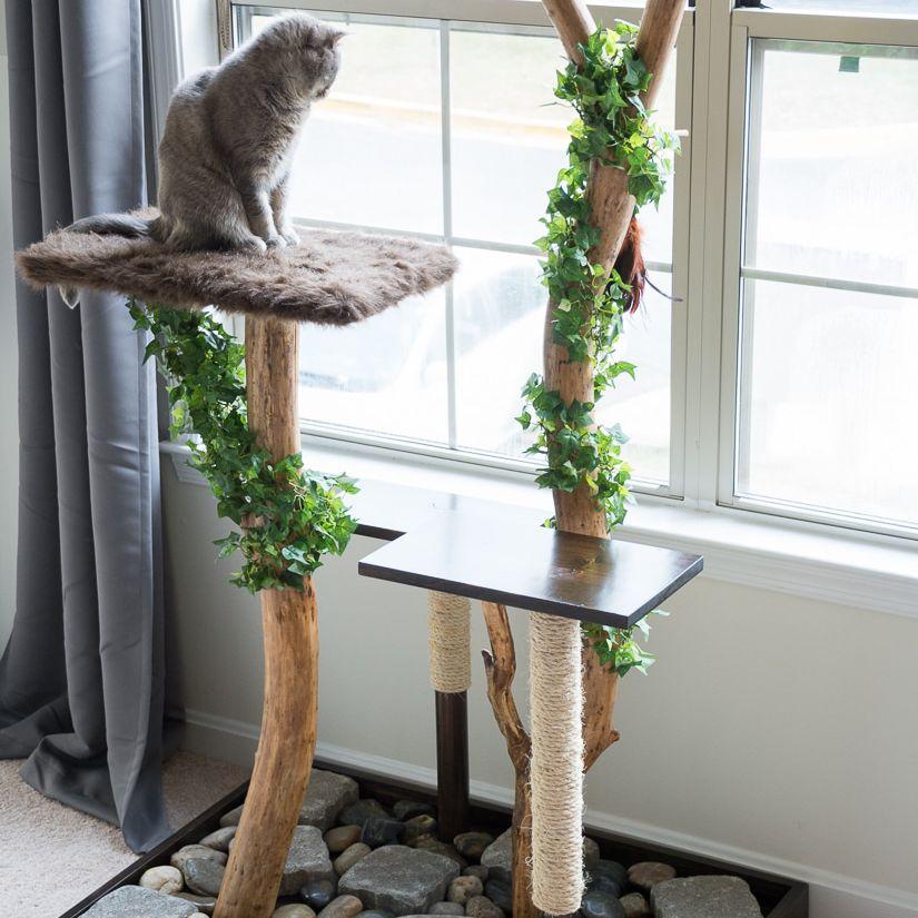 Cat Trees online